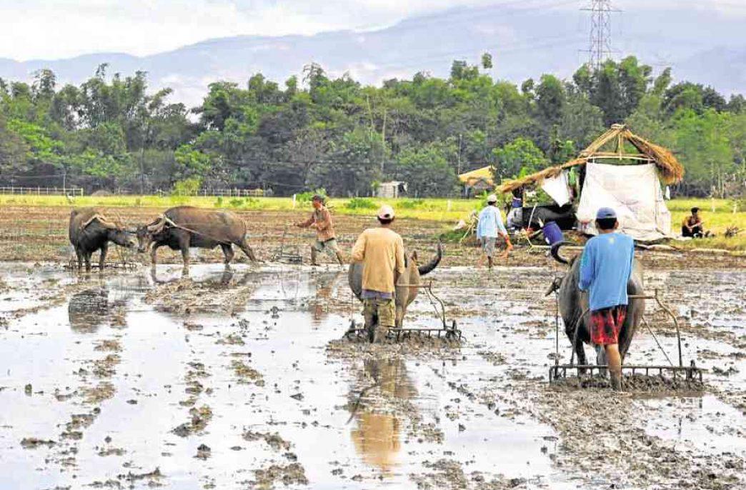 Филиппинским аграриям помогут удобрениями
