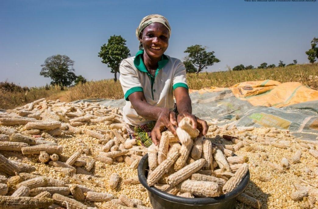 NSIA инвестирует в сельское хозяйство Нигерии