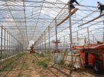 В Дагестане возводится большой тепличный комплекс