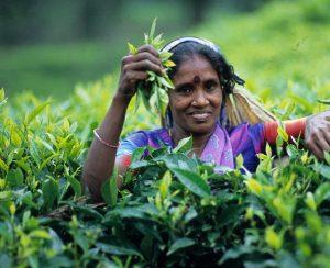 Шри-Ланка запасается удобрениями