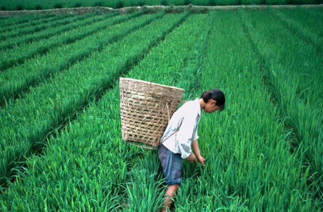 Китайские аграрии оптимизируют обработку полей