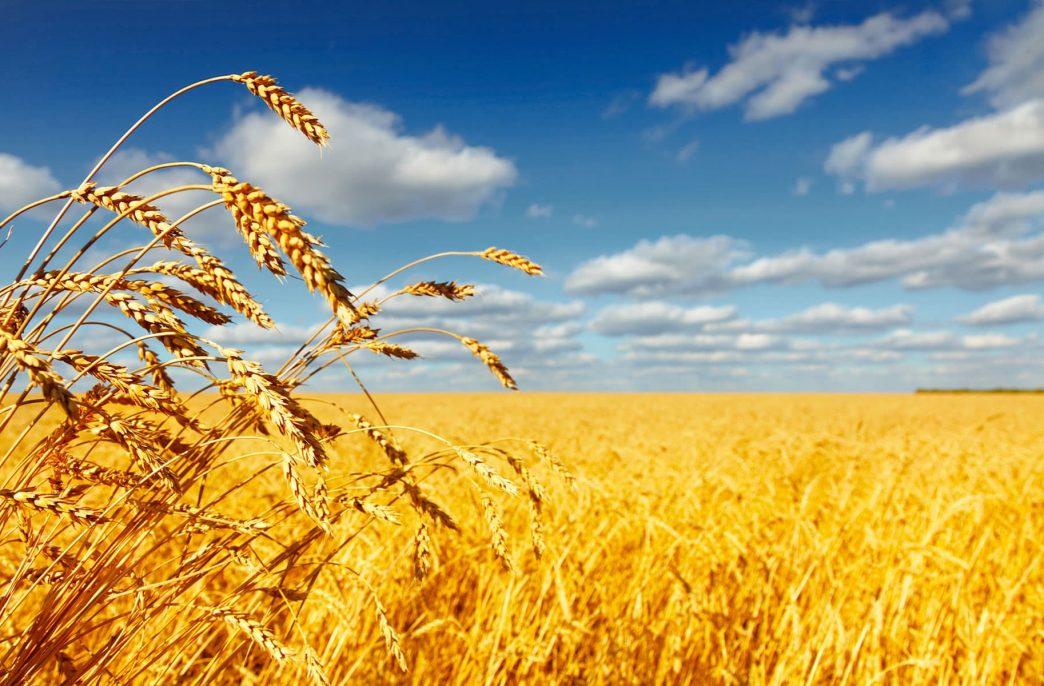 В Краснодарском крае строят планы на урожай