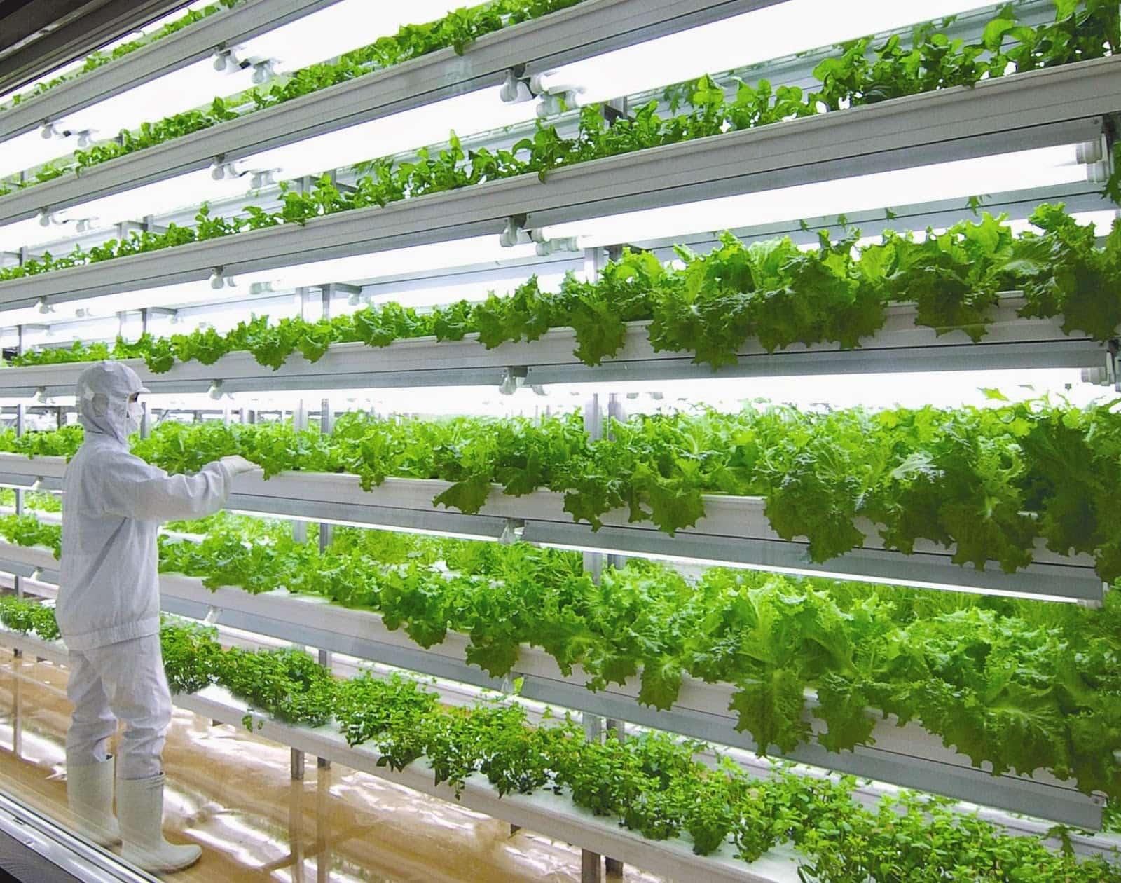 Выращивание растений под по 769