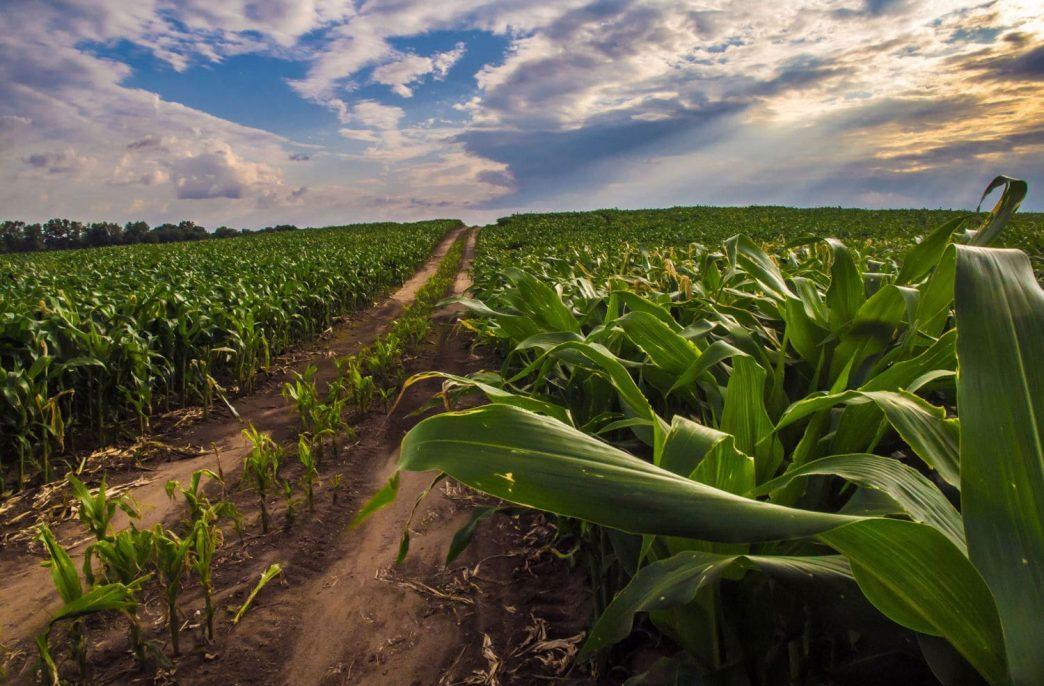 Смогут ли дцРНК-агенты заменить пестициды?