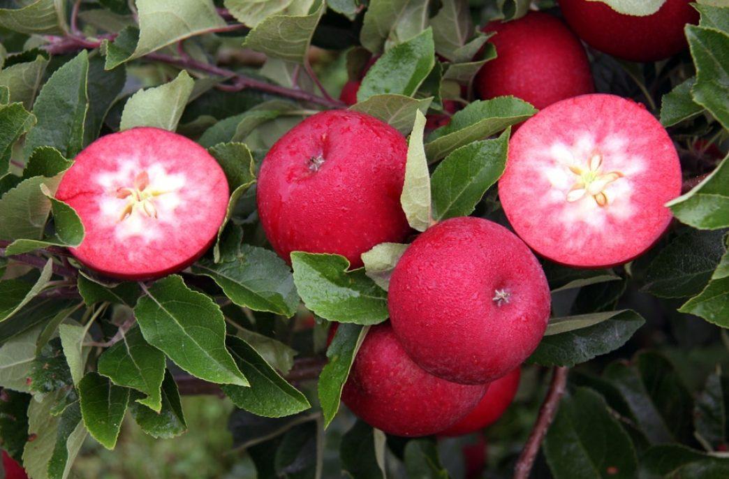 Краснодарский край увеличит закладку садов на 26%