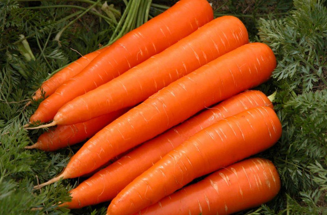 «АФГ Националь» планирует повысить урожаи моркови в Нижегородской области