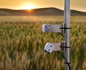 Насколько эффективны NDVI-сенсоры в азотной подкормке?