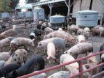 Вьетнам займется экологизацией сельского хозяйства