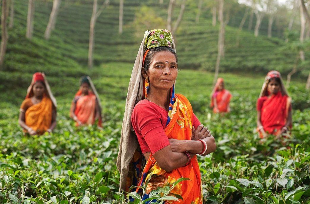 В Индии ожидается стабильный спрос на удобрения