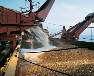 Chatham Rock Phosphate привлекает финансирование для добычи фосфоритов