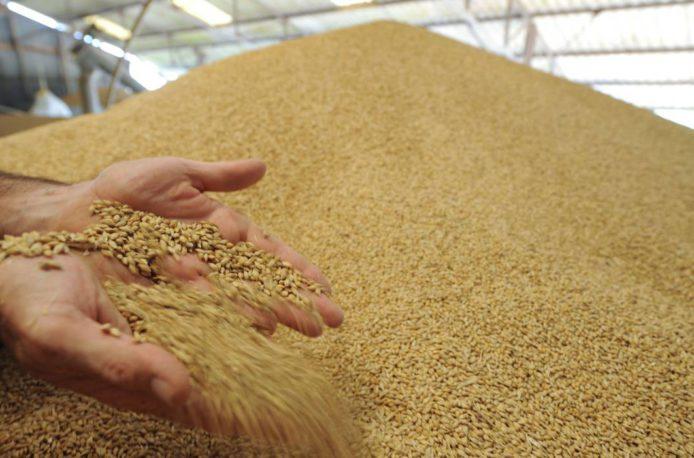 Экспорт пшеницы из Франции побьет 12-летний максимум