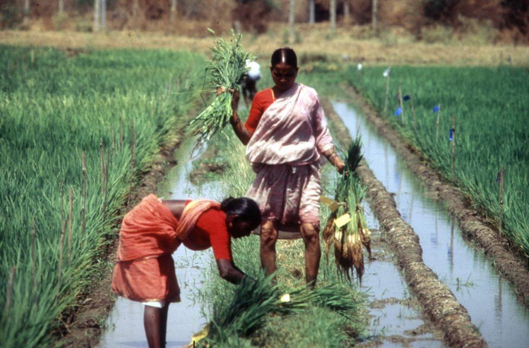 В центре Индии могут запретить использование агрохимикатов