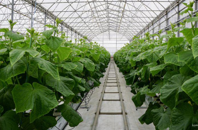 «Ренова» построит тепличный комплекс в Чувашии