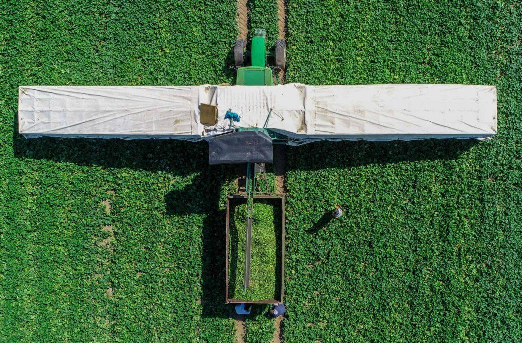 Интенсивное земледелие не победит голод
