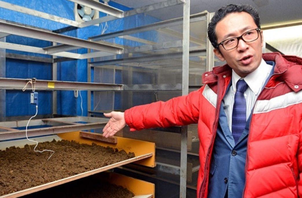 Комнатные мухи будут производить удобрения