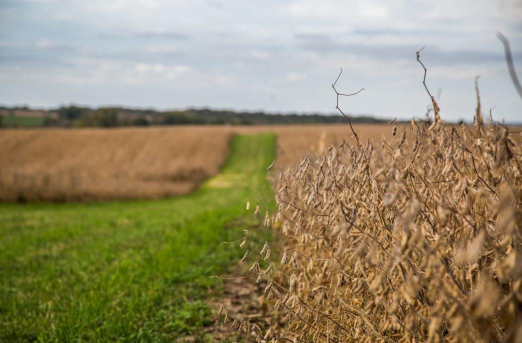 Агроэкология — новый этап развития сельского хозяйства