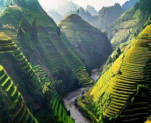 Вьетнам увеличит выпуск органических удобрений