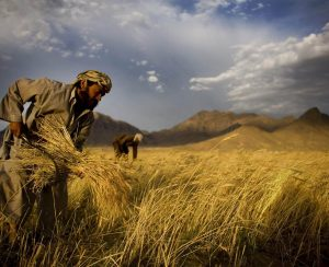 Продажи удобрений в Пакистане и растут, и падают