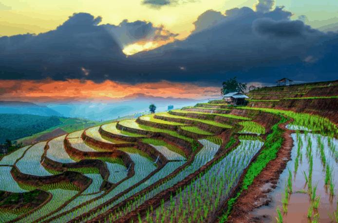 Вьетнам увеличивает импорт агрохимикатов