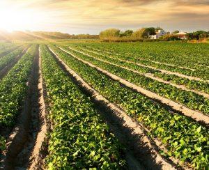 В Бразилии на помощь точному земледелию придут дроны