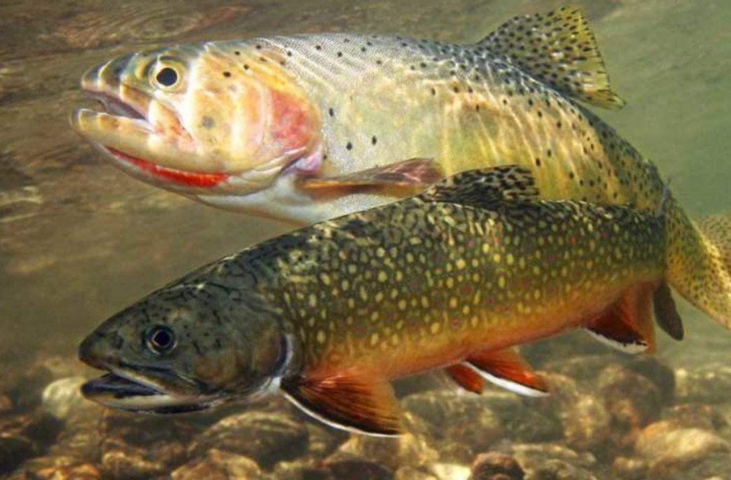 В Карелии хотят делать удобрения из рыбных отходов
