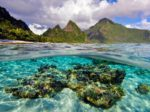 Самоа потянуло на органическое земледелие
