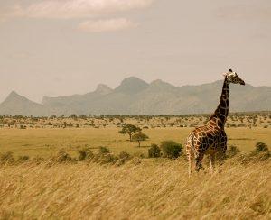 K+S Group покоряет Африку