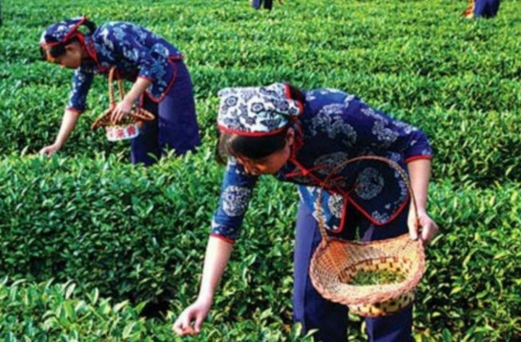 В Китае продолжают закисляться почвы
