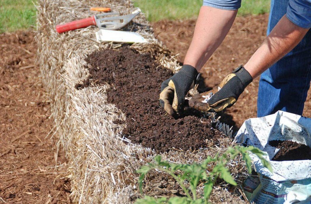Выращивание в соломе имеет свои преимущества
