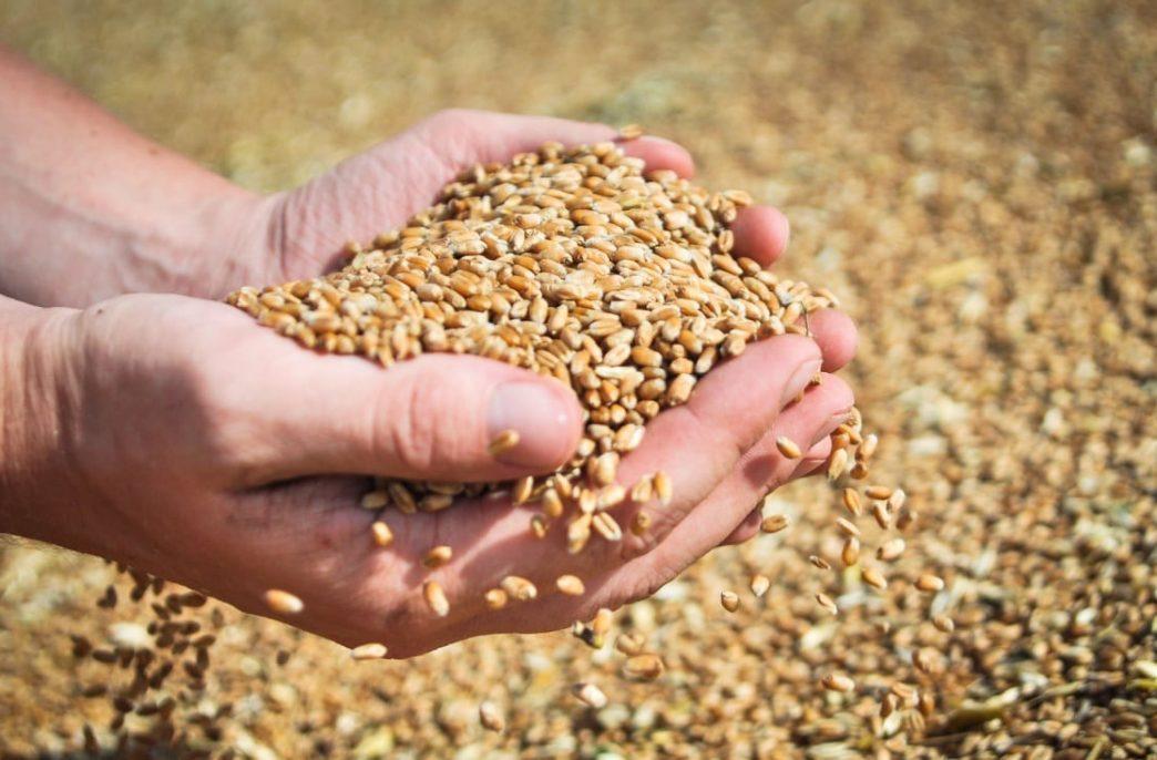 В сельском хозяйстве России наблюдаются интересные тенденции