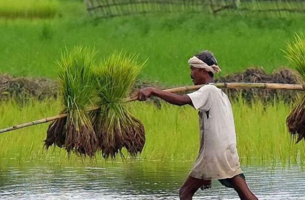 В Индии растут продажи агрохимикатов