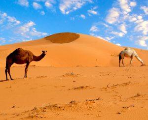 Вокруг фосфоритов Западной Сахары продолжаются баталии