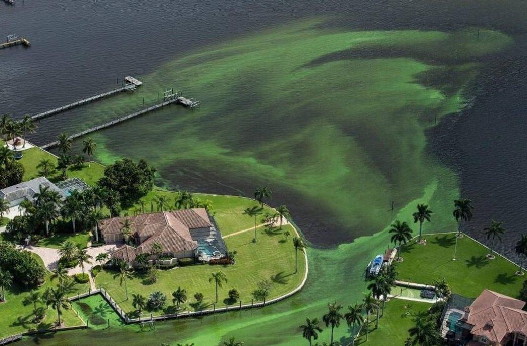 Экологи Флориды бьют тревогу