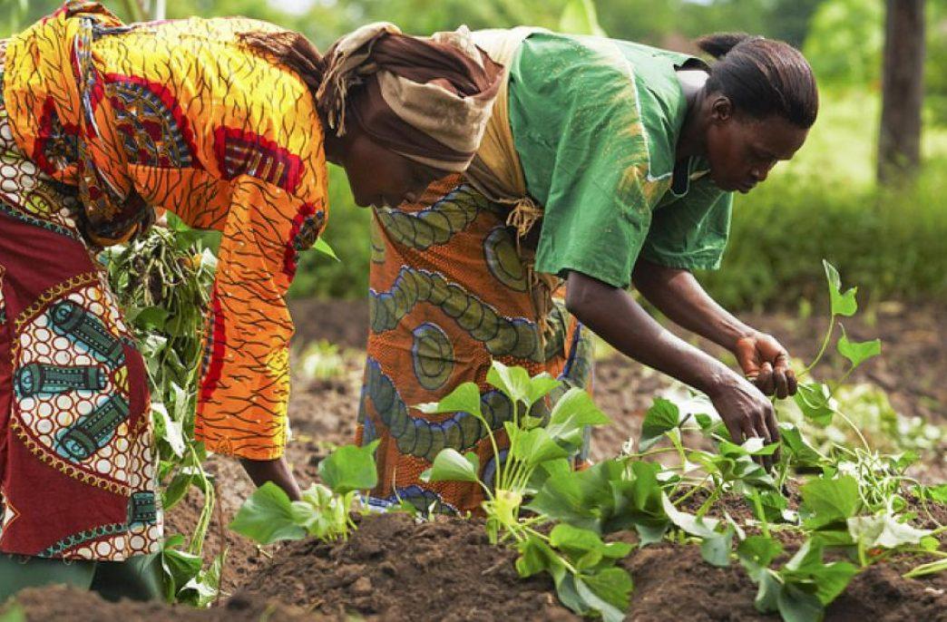 Вермикультура набирает популярность в Кении