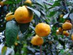 В Сибирском ботаническом саду испытывают новое удобрение