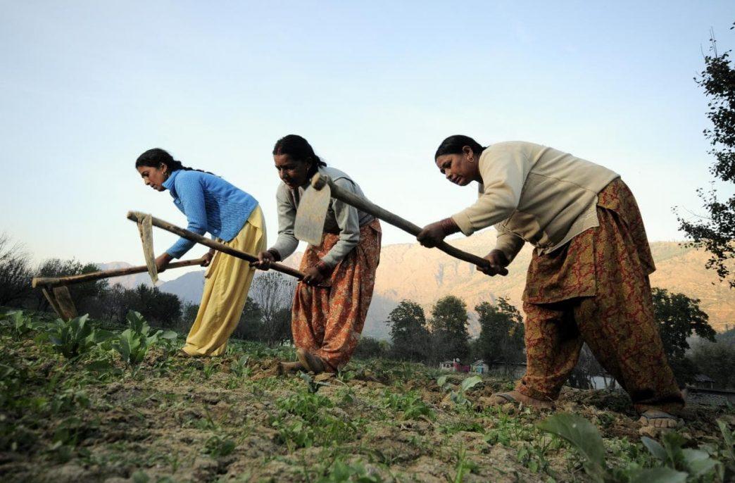 В Индии разрастается скандал с удобрениями
