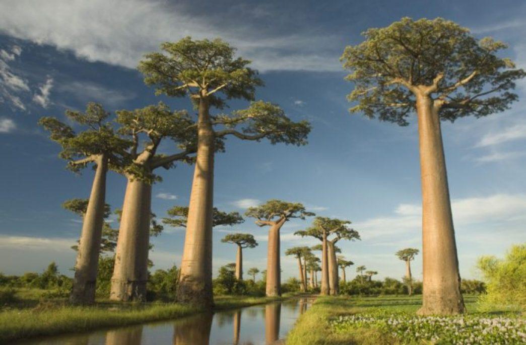 Avenira готовится к масштабной добыче на Baobab