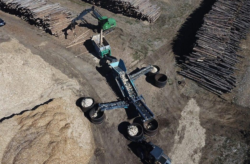 В США из мертвых деревьев создадут биоуголь