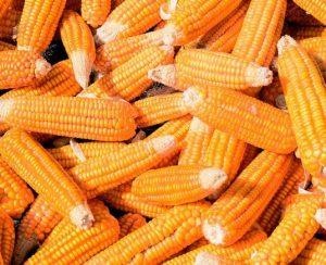 В США начались продажи новых пробиотиков
