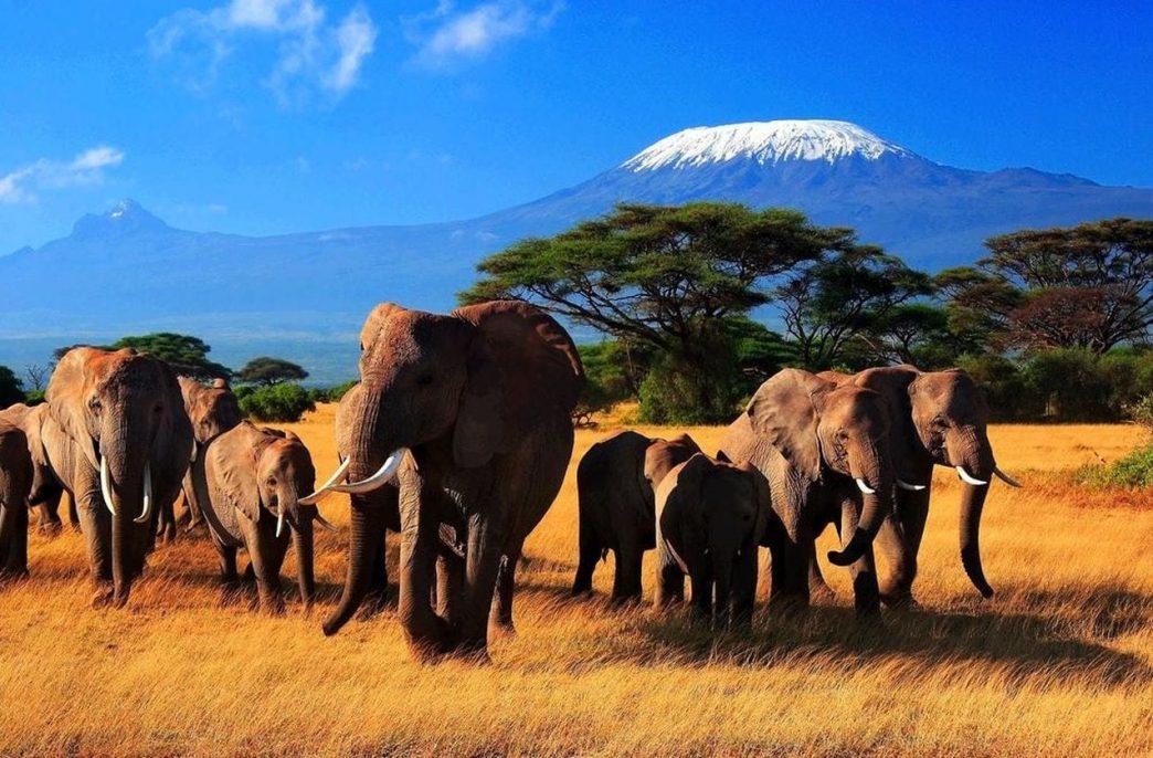 Oikocredit вложился в проект в Кении