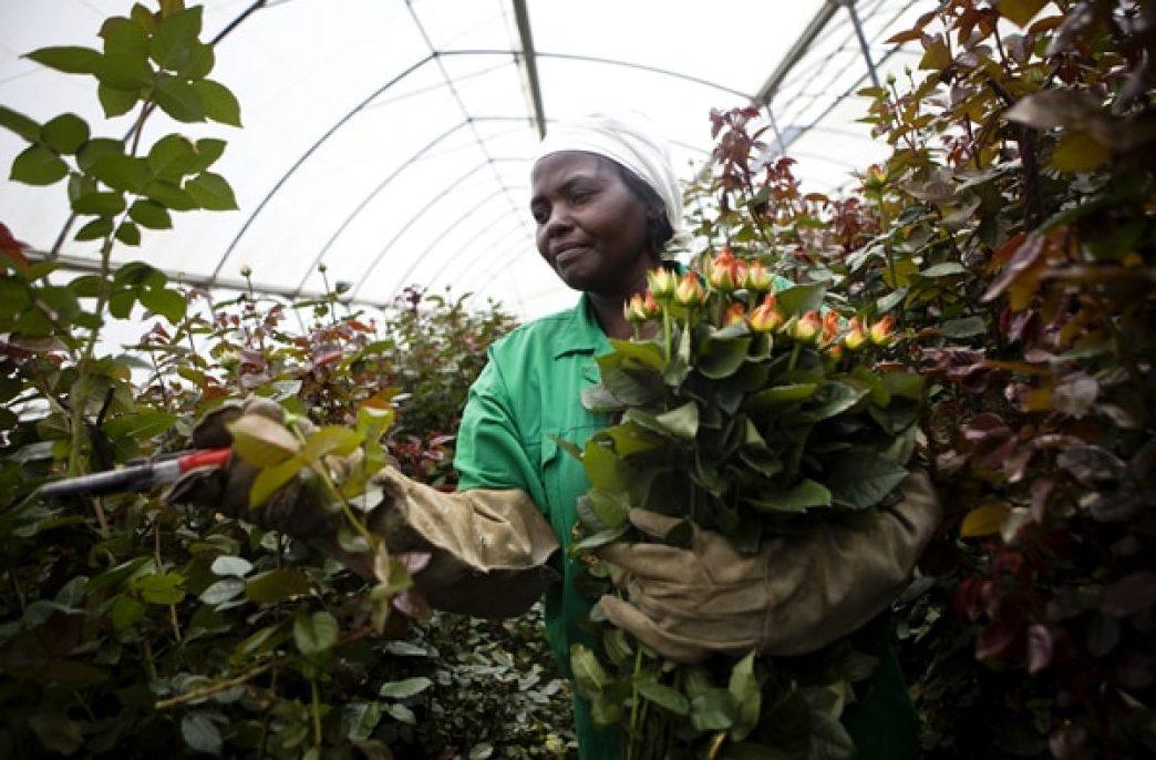 В Кении растет нехватка удобрений
