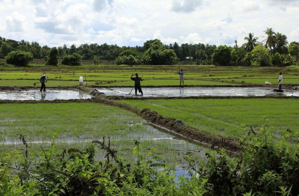 Фермеров Шри-Ланки защитят от инфляции