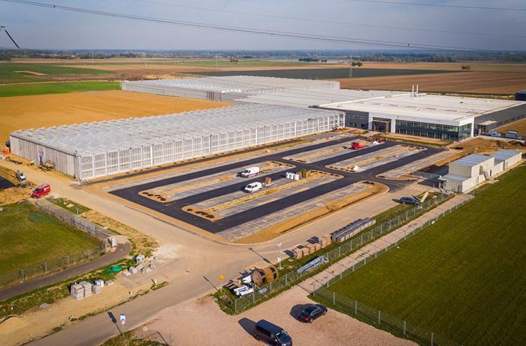 BASF решил вплотную заняться огурцами