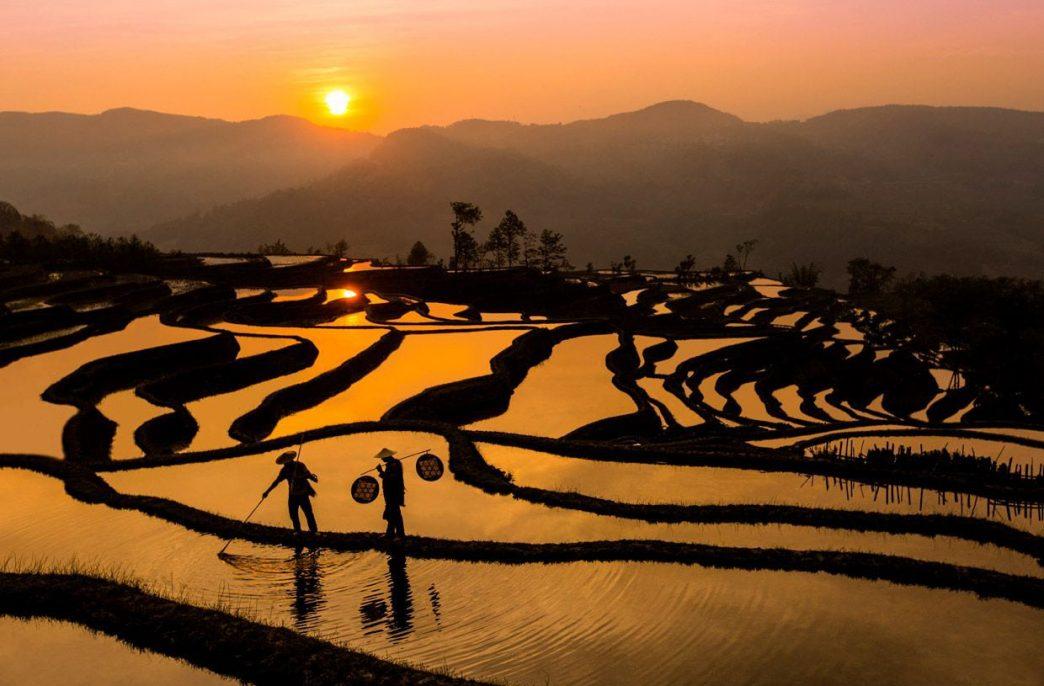 В Китае может снизиться использование удобрений