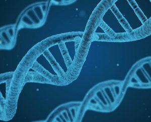 В Сибири не будет применяться генная инженерия