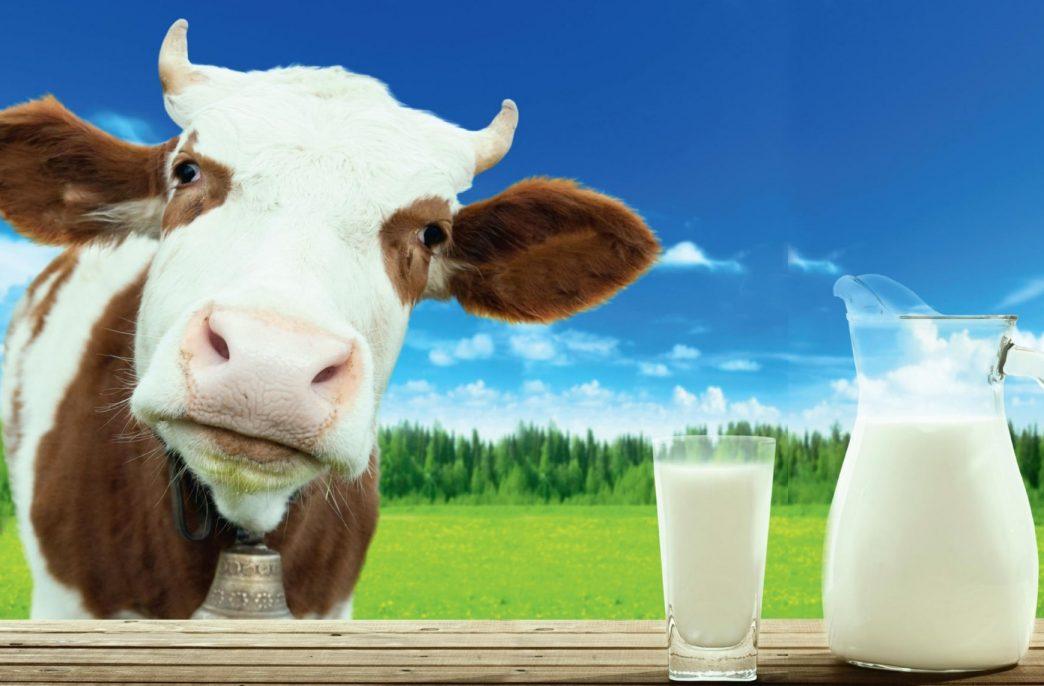 У молочной отрасли Подмосковья — большие перспективы