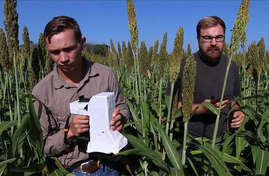 В США создан новый сенсор для растений