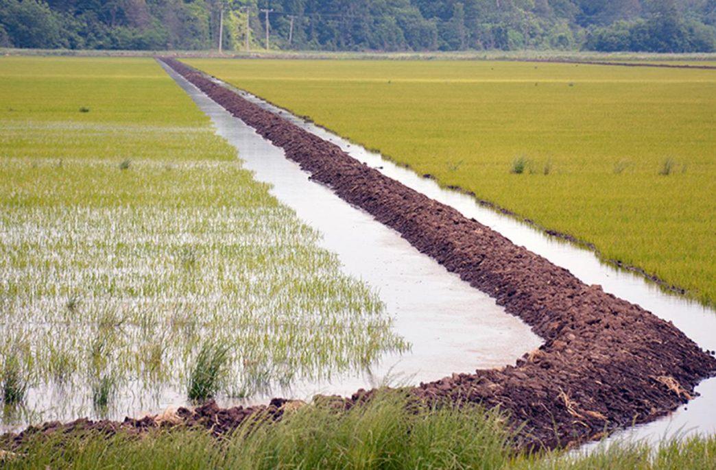 Азотные удобрения влияют на выбросы метана