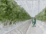 В Архангельской области может появиться тепличный комплекс 5-го поколения