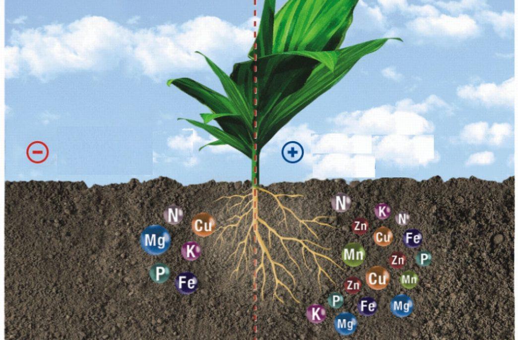 В Беларуси определена потребностях в агрохимикатах